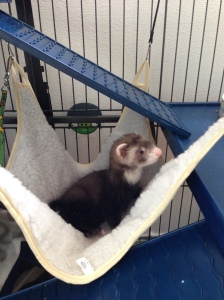 Now he enjoys his hammock.