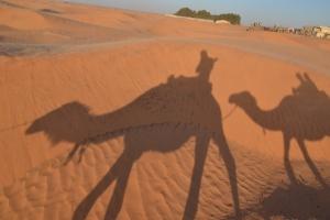 Camels riding