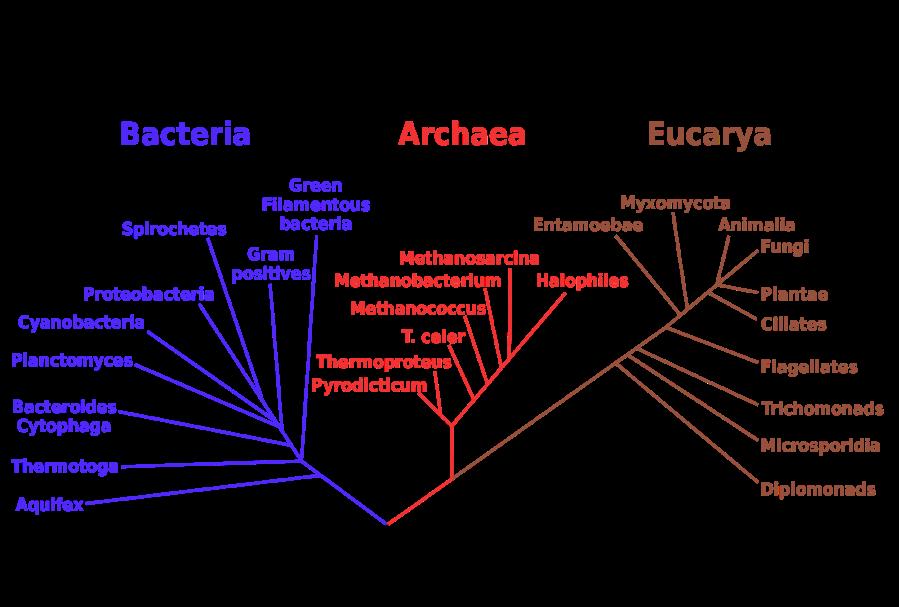 Phylogenetic_tree