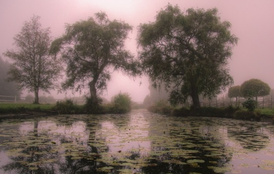 Morning Card Nature Mist Sweden Mirror Image